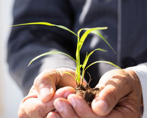 Close-up Of A Businessman Holding Sapling In His Hands
